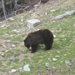 Bear 09 -5