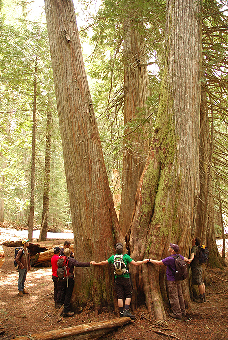 A group circling a big tree